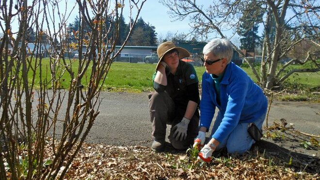 Volunteers help tend Owen Rose Garden in Eugene (3)