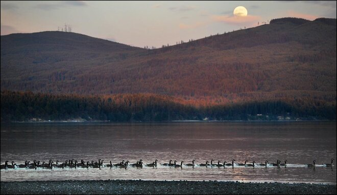 Supermoon geese res