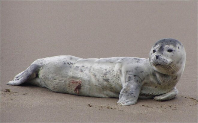 'Perfectly normal for seal pups to be left alone on the beach'