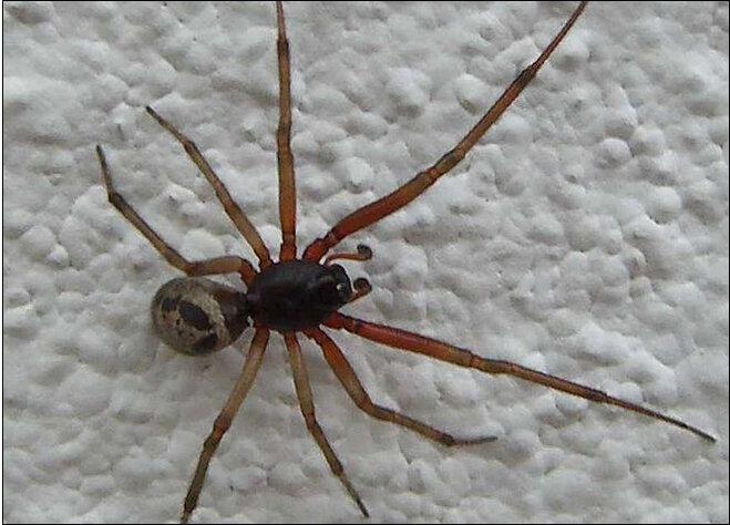 Venomous biting spiders force school closure