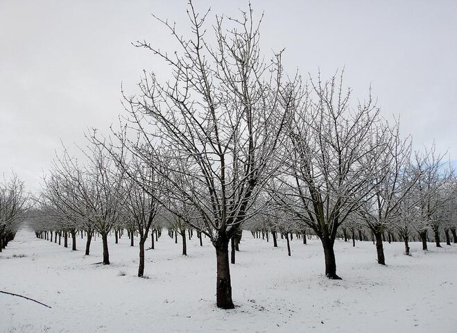 Snowy Orchard by Jeff Sanders