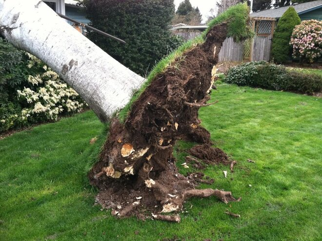 Wind damage on Suburban Avenue in Eugene on March 12