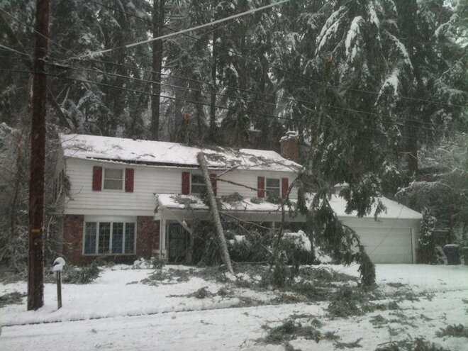 Trees on house on 43rd near Spencer Butte Middle School on March 21
