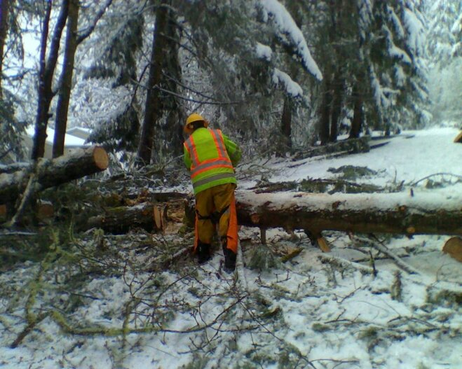 Removing trees downed by snow March 21 (1)