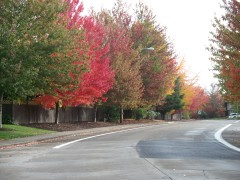 Fall color in Corvallis