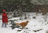 Patricia throws a snowball to Kip the Golden Retriever on Thursday Feb. 6th - Photo by Cynthia Campbell