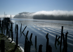 Fog on the Siuslaw