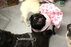 110215pugs_gallery.jpg (4)