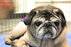 110215pugs_gallery.jpg
