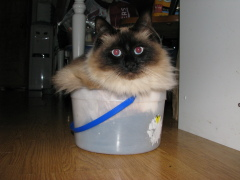 Earl in the ice cream bucket.