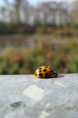 Ladybug enjoying the sunshine