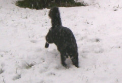 Cats love to play in the snow too