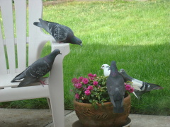 Backyard birds before dinner
