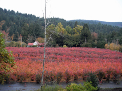 The Blueberry Patch in Leaburg OR