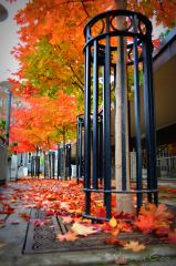 Fall in Eugene