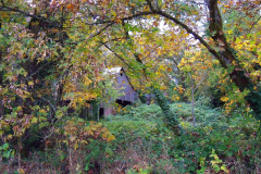 Fall colors surrounding an old barn