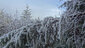 Freezing fog on Ridgeline Trail on January 22 2013 (10)