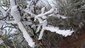 Freezing fog on Ridgeline Trail on January 22 2013 (12)