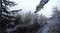 Freezing fog on Ridgeline Trail on January 22 2013 (7)