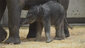 baby elephant one day old (6)