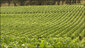 stoller_vineyard_two