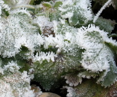 Crystals created by Frost