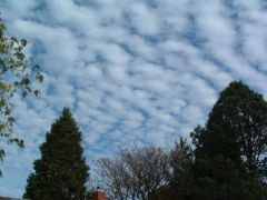 Altocumulus Clouds (mackerel sky)