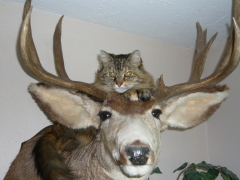 House Cat Bags Big Buck