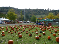 Camp millennium pumpkin patch