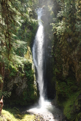 Short Easy Hikes in the Umpqua Forest