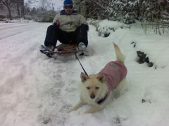Dogsled time in south eugene!