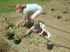 All-volunteer garden: Food for the needy
