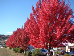 Leaf Peeping in Roseburg, Oregon