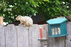 Squirrelly Antics