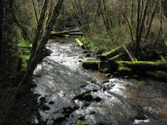 Upper Whittaker Creek