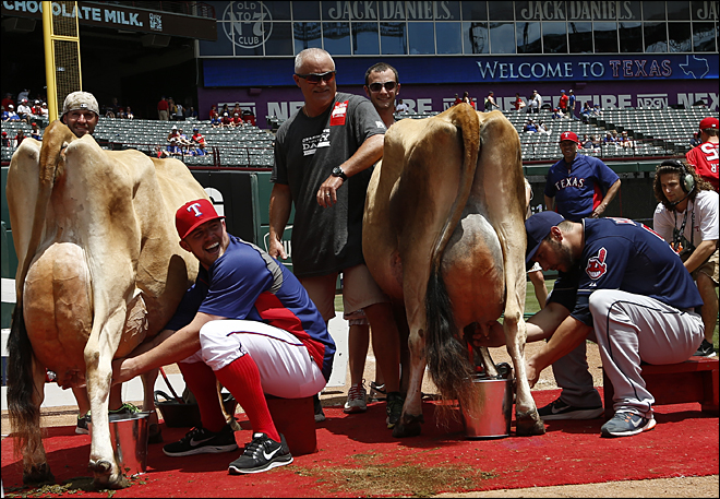 Udderly dominant: Catcher wins cow-milking event