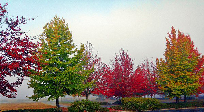 Autumn color at Thurston bus station - photomike68