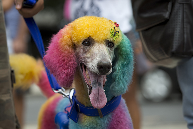 Dogs have their day at Rio pre-Carnival party
