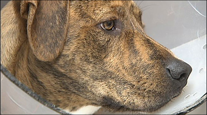 Dog recovering after being dumped