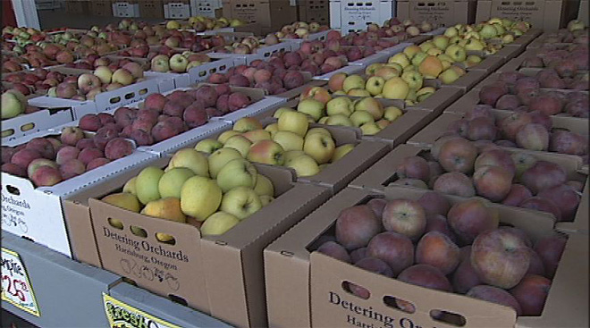 Apple season in full swing: 'One of the best I've ever seen'