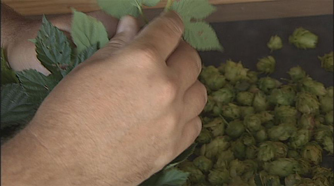 Cancer-fighting properties of hops