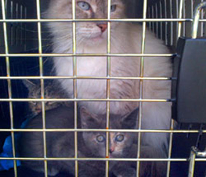 59 cats rescued from Ore. apartment