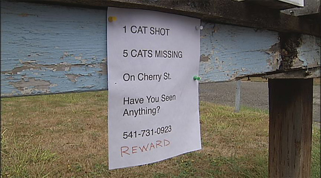 Neighbors at odds over missing cats: 'I did not shoot your cat!'