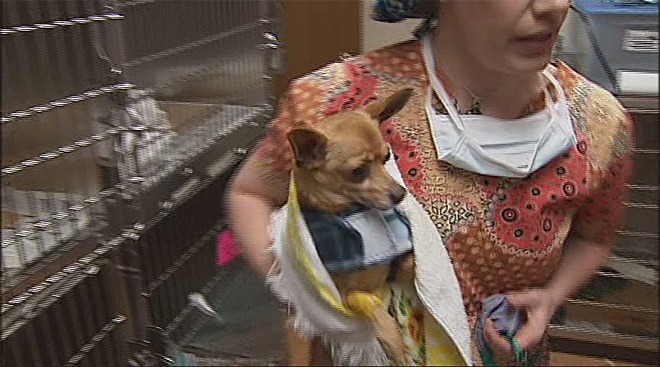 Battling pet overpopulation: 'They end up at the shelter'