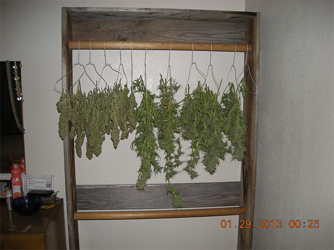 Coquille marijuana grow 1
