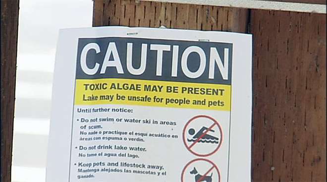'It's just letting people know if they see an algae bloom, don't swim'