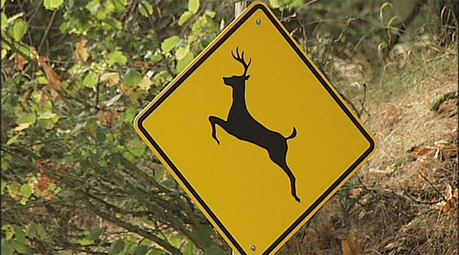 Deer in the road? Don't swerve!