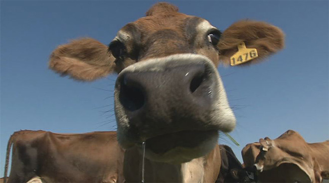 Dairy Farmer Wants Happy Cows