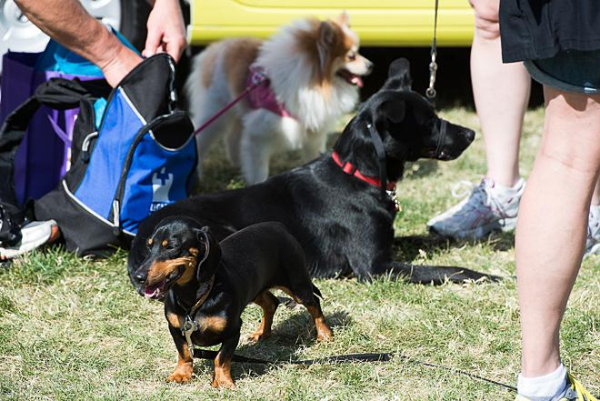 Oregon Humane Society's Doggie Dash 2013