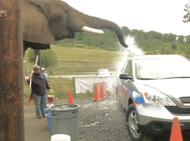 George the car washing elephant is set to turn 31-years-old on Saturday